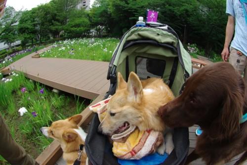 2011年06月19日のmogwai、tamegorou、gohan