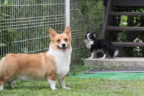 2011年07月24日のgohan&gizmo