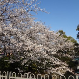 2012年04月08日 桜